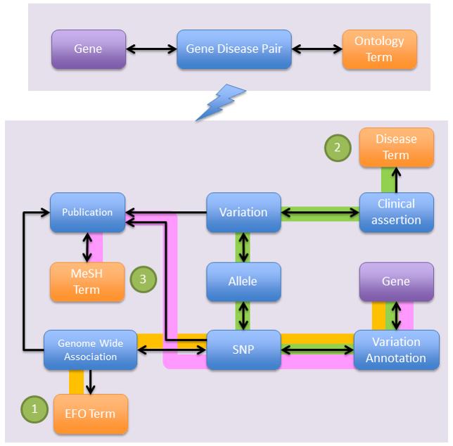 遺伝子はEFO①,MedGen②,及びMeSH③の疾患のオントロジー用語に,各々GWAS(朱色ライン),ClinVar(緑色ライン),及びdbSNP(桃色ライン)のSNPデータを介して関連付けされます。